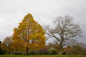 autumn-contrast